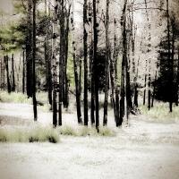 Rick Filler - An Early Snow #2
