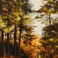 Patrick Lajoie - Island Road