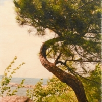Patrick Lajoie - Crooked Tree