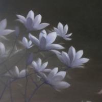 Greg Nordoff - Magnolias 4