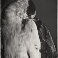 David Ellingsen - Sky Life Series
