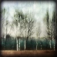 Rick Filler - Birches