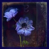 Rick Filler - Blue DeCaen