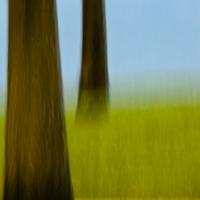 Angela Cameron - Trees 51