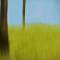 Angela Cameron - trees 50