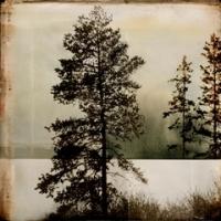 Rick Filler - Contemplation