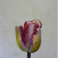 Erin Vincent - Tulip with Shadow