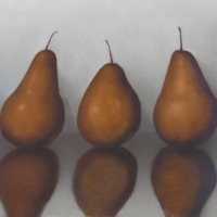 Greg Nordoff - The Pears