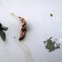 Talia Shipman - Trust In Me