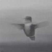 Greg Nordoff - Hummingbird II