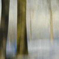 Angela Cameron - Trees 184
