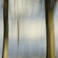 Angela Cameron - Trees 129