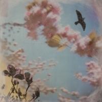 Arleigh Wood - Birds Drift on Cherry Blossom Clouds 1