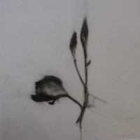 Madeleine Lamont - Mylar Flower Series Black 1