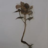Madeleine Lamont - Mylar Flower Series Brown 1