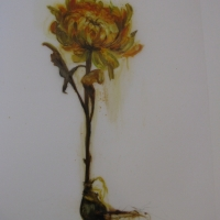 Madeleine Lamont - Mylar Flower Series Yellow 3