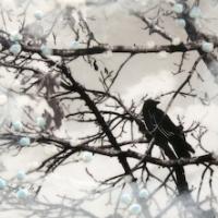 Arleigh Wood - Too Late To Fall