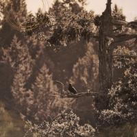 Arleigh Wood - Solo