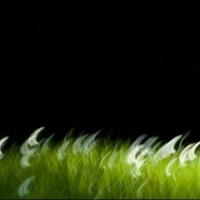 Angela Cameron - Flowing Daisy