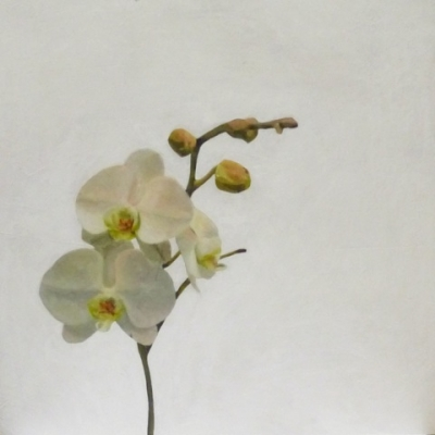 Erin Vincent - White Orchid with Buds