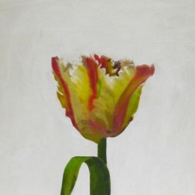 Erin Vincent - Tulip
