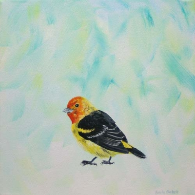 Emily Bickell - Western Tanager