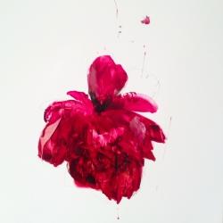 Madeleine Lamont - Velvet Paper Red Peony's