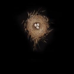 Dorion Scott - Untitled (nest)
