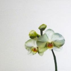 Erin Vincent - White Orchid