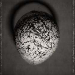 David Ellingsen - Common Murre Egg 1