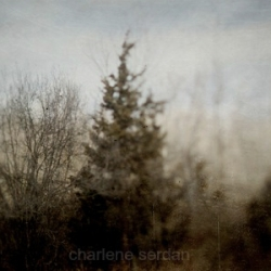 Charlene Serdan - I dream of trees