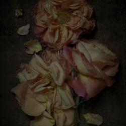 Kristin  Sjaarda - Broken Roses