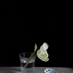 Kristin  Sjaarda - Water Glass 1