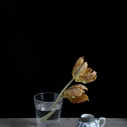 Kristin  Sjaarda - Water Glass 2