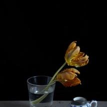 Kristin  Sjaarda - Water Glass 2