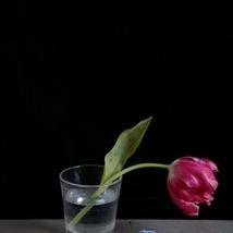 Kristin  Sjaarda - Water Glass 3
