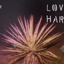 Talia Shipman - Love Hard
