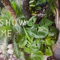 Talia Shipman - Show Me