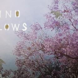 Talia Shipman - Wind Blows