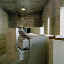 Maureen O'Connor - Great Horned Owl Version 2
