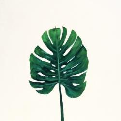 Erin Vincent - Plant 1