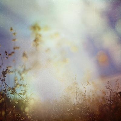 Never Let Go by Charlene Serdan