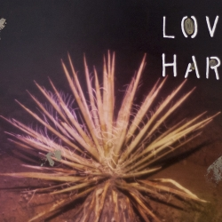 Talia Shipman - Love Hard