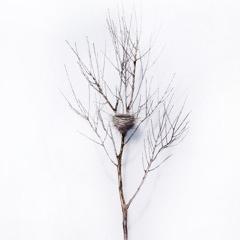 Dorion Scott - Untitled - Nest 11