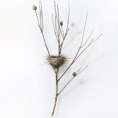 Dorion Scott - Untitled - Nest 6