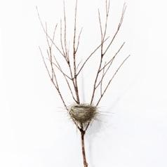 Dorion Scott - Untitled - Nest 5