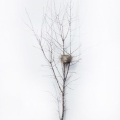 Dorion Scott - Untitled - Nest 10