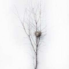 Dorion Scott - Untitled - Nest 10