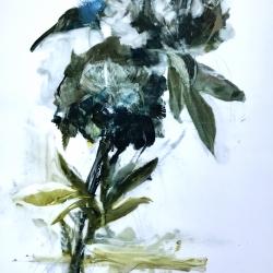 Madeleine Lamont - Blue Peony 2018