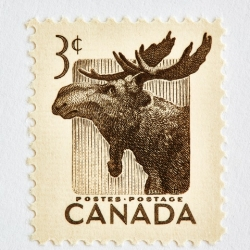 Peter Andrew - Wildlife Week Stamp- Moose
